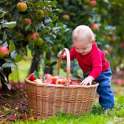 Young kid picking apples